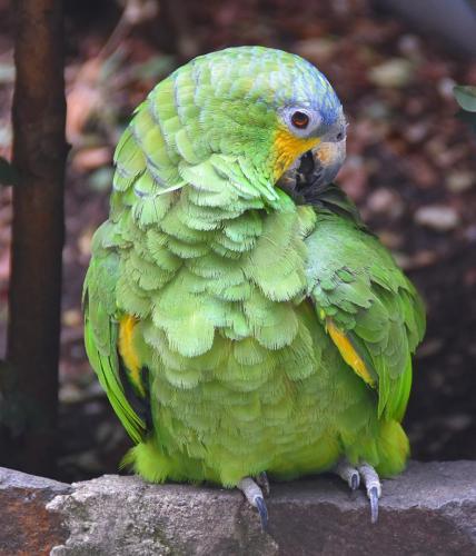 Church garden parrot