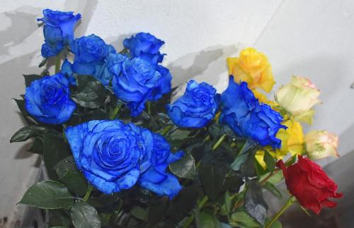 Colored roses for the Japanese market