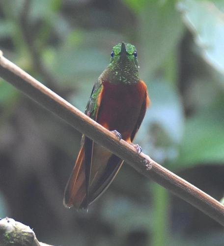 Humming bird sanctuary