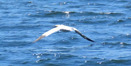 An albatross?
