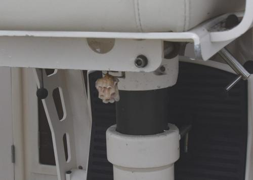 wasp nest under the helm seat