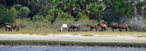 Cumberland wild horses