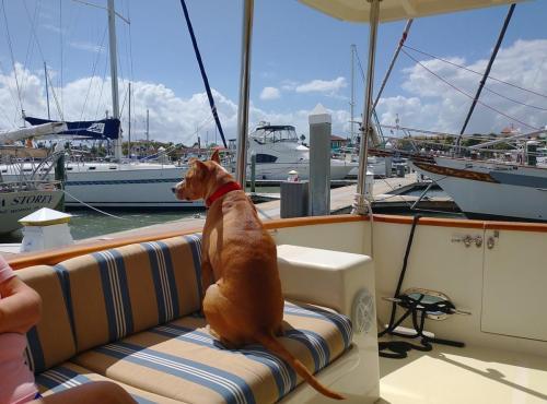 Watching the marina life