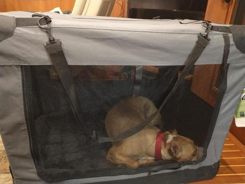 Bella in her traveling crate