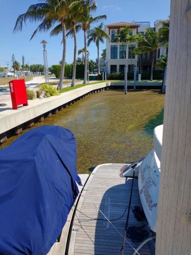 Sea grass in the marina