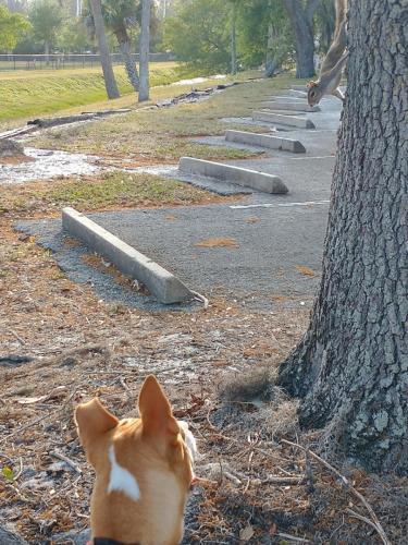 Bella and squirrel