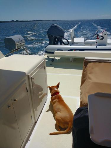 Bella watching the ICW go by!